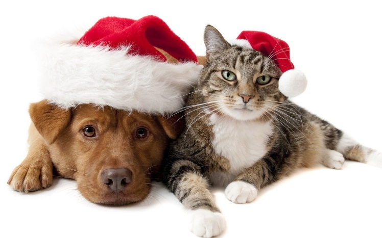 christmas-dog-and-cat